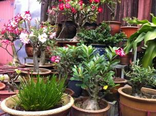 Flower Pots, Penang
