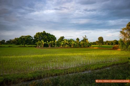 Rice fields surround Battambang town.